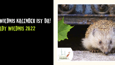 Der Kalender 2022 ist da!
